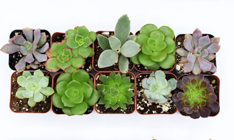 mini potted succulent wedding favors