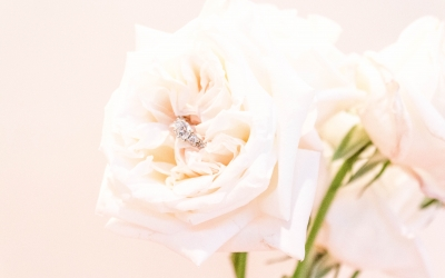 Creamy White Blush Garden Rose