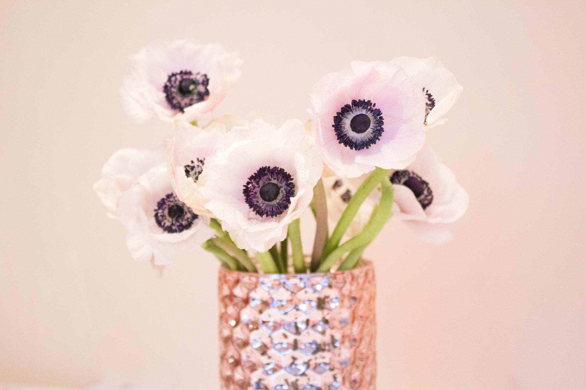 White and Blush Anemone