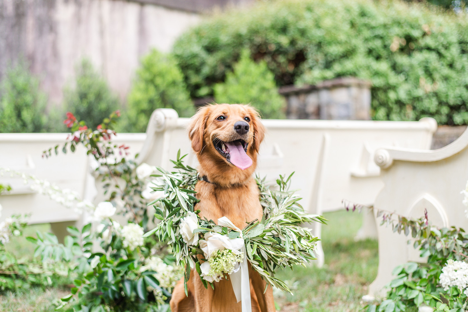 dog of honor, dog wearing a floral garland for wedding