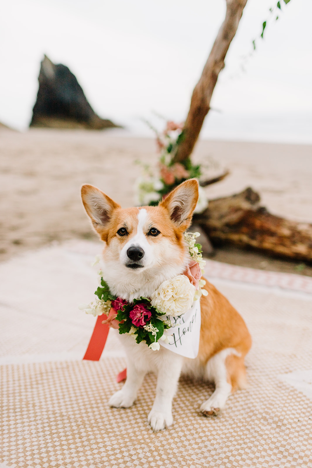 cute dog of honor posing for a picture
