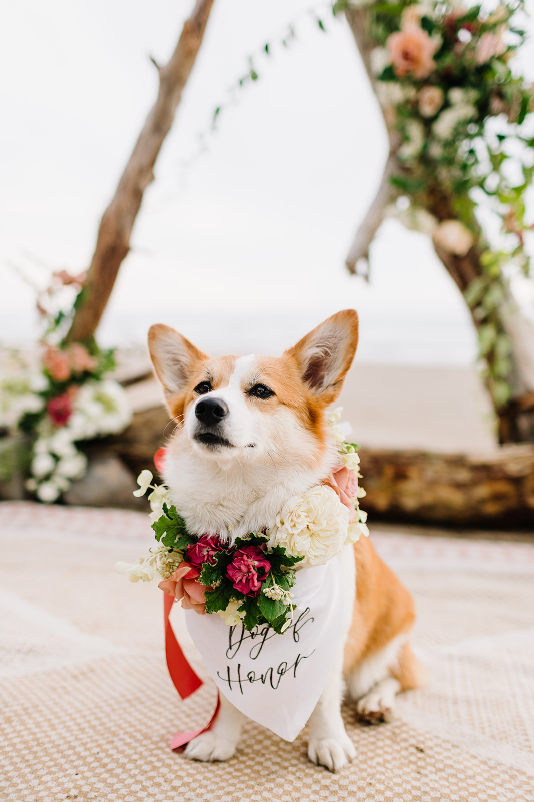corgi of honor