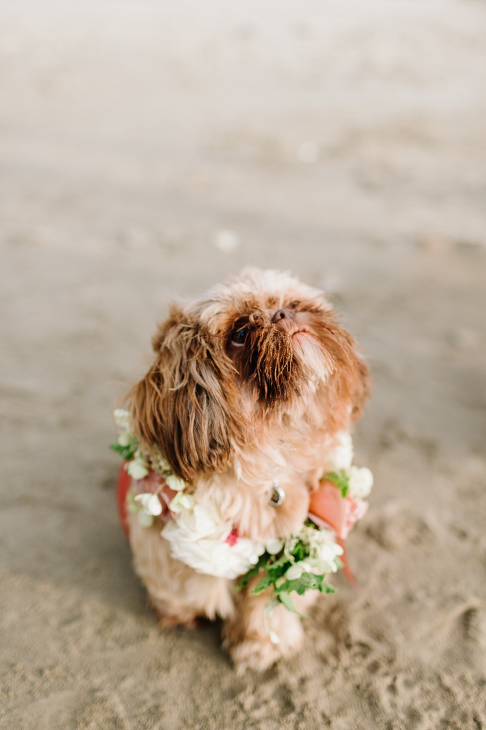 cute dog of honor with a floral collar
